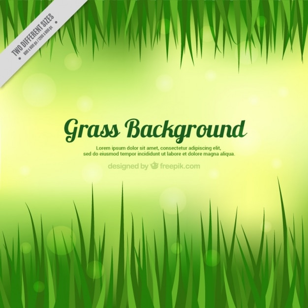 Grass background with template Vector   Free Download