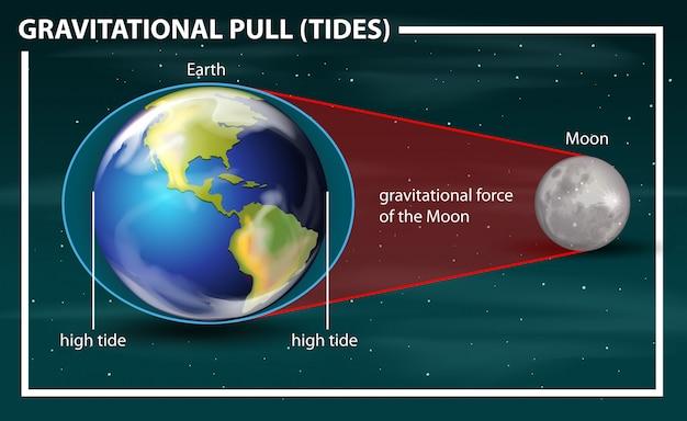 Gravitational pull tides diagram Free Vector