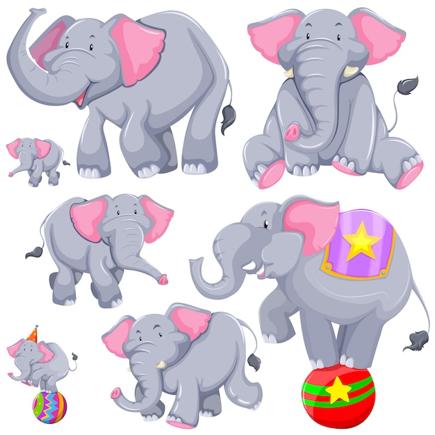 Gray elephant in different actions Free Vector