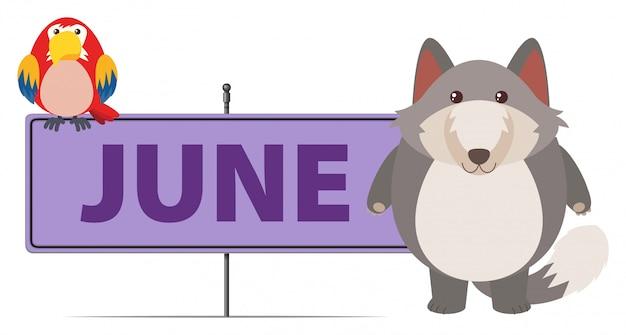 Серый лис и знак для июня Бесплатные векторы