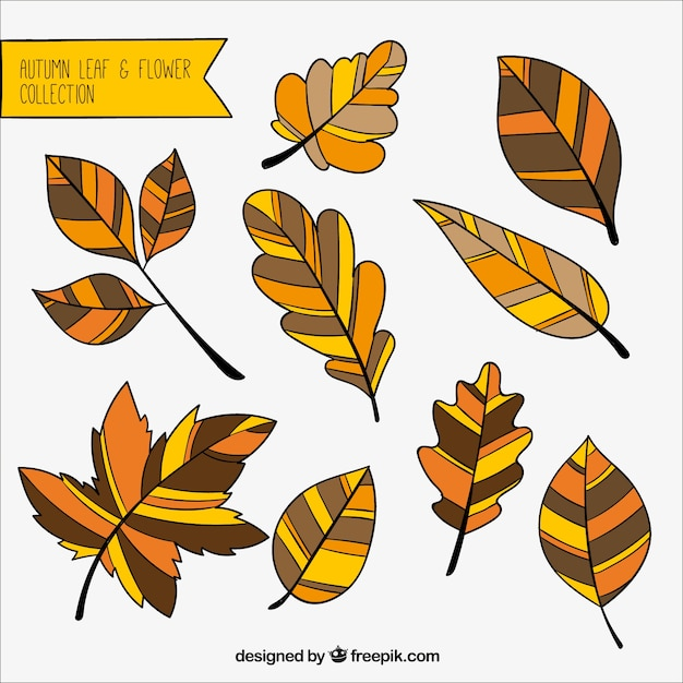 Great autumnal leaves with different\ colors