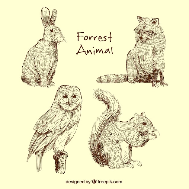 Great collection of forest animals Free Vector