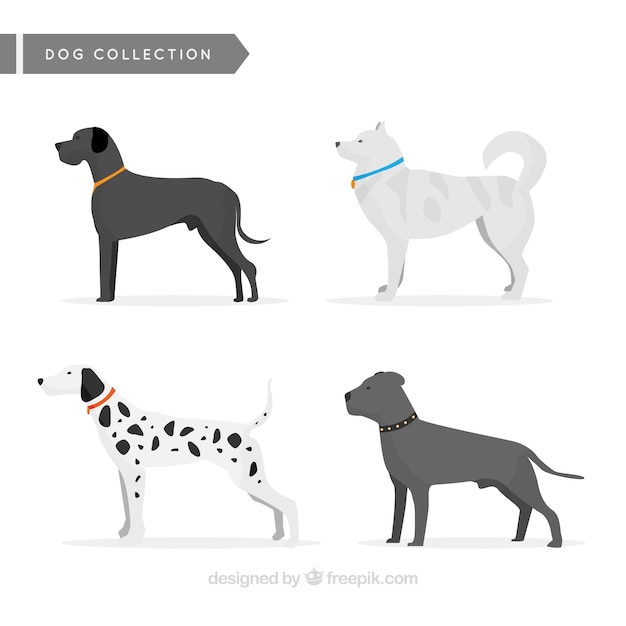 Great collection of profile dogs Free Vector