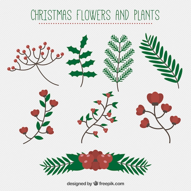 Great set of christmas flowers and plants vector free