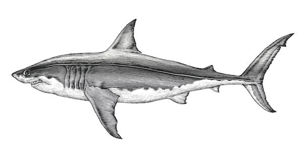 ホオジロザメの手描きのヴィンテージの彫刻イラスト Premiumベクター