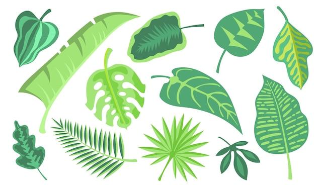 緑のエキゾチックな葉フラットイラストセット。漫画のモンステラとヤシのジャングルは、孤立したベクトルイラストコレクションを残します。熱帯植物と植物装飾の概念 無料ベクター