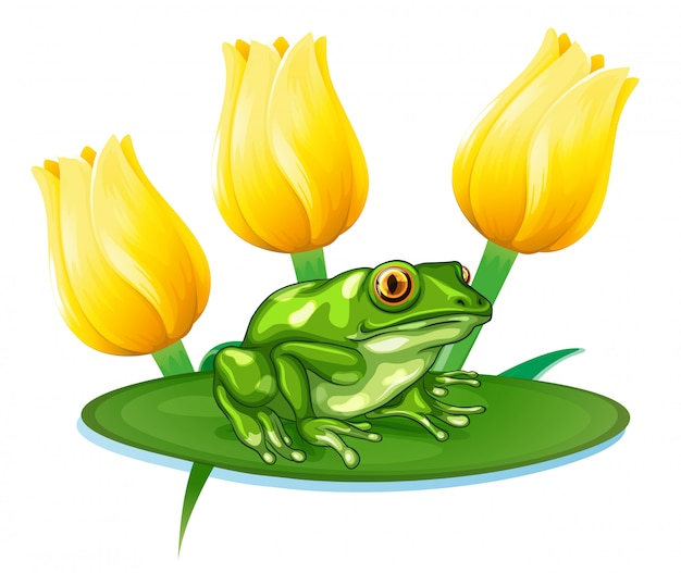 Green frog on water lily Premium Vector