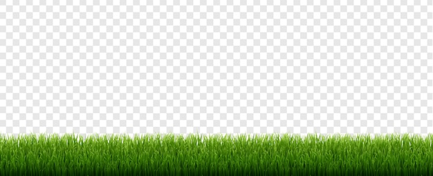 Green grass border with isolated transparent background Premium Vector