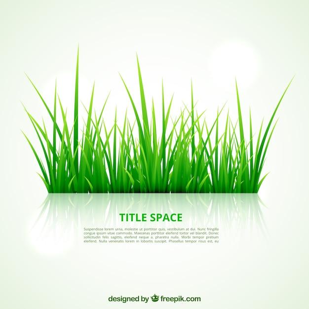 Green grass template Vector   Free Download