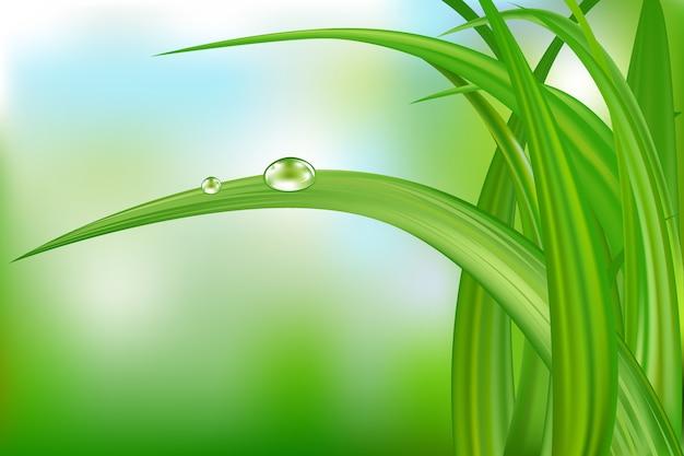 美しい背景に水滴と緑の草 Premiumベクター
