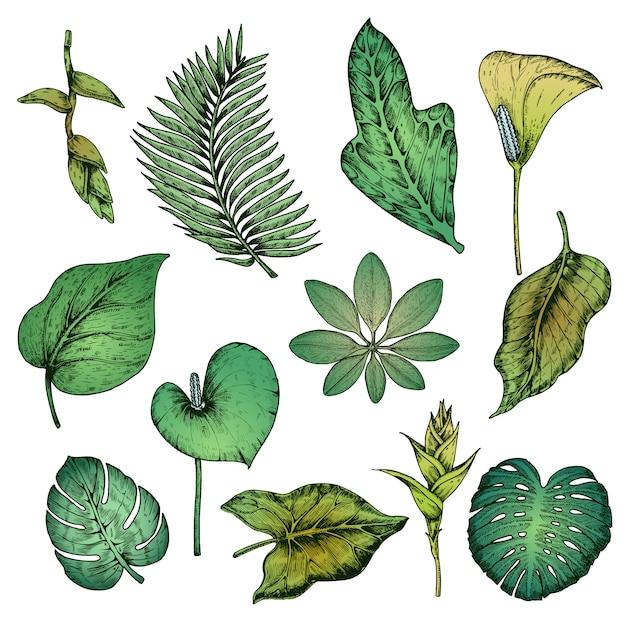 녹색 손으로 그린 열 대 식물 세트 무료 벡터