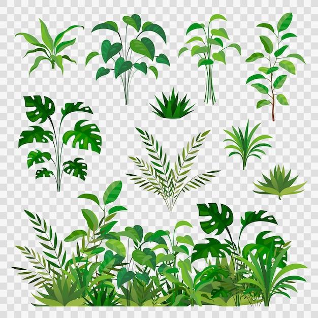 Зеленые травяные элементы. декоративная красота природа папоротники и листовые растения или травы зелень ветки и цветочный ботанический декор Premium векторы