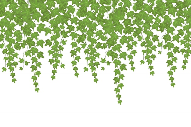Green ivy wall climbing plant hanging from above. garden decoration Premium Vector