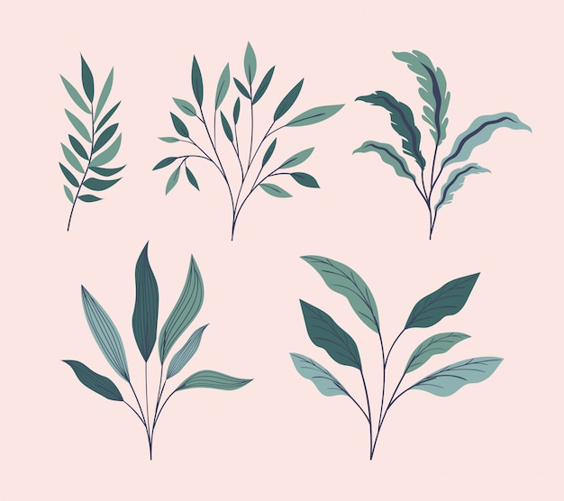 Green leafs natural set icons Free Vector