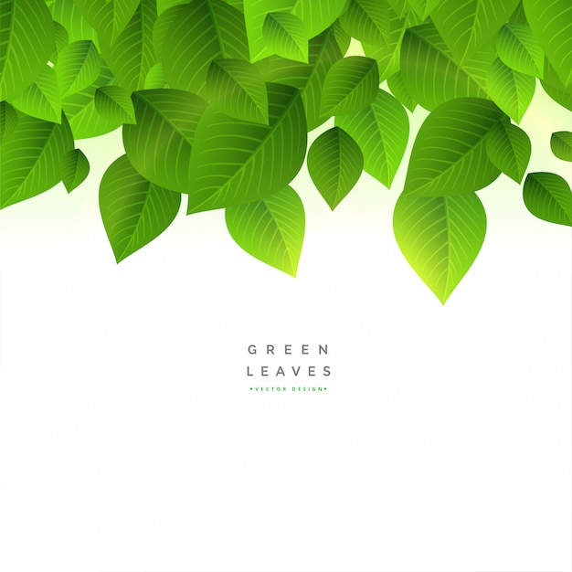 Green leaves background  with text space Free Vector