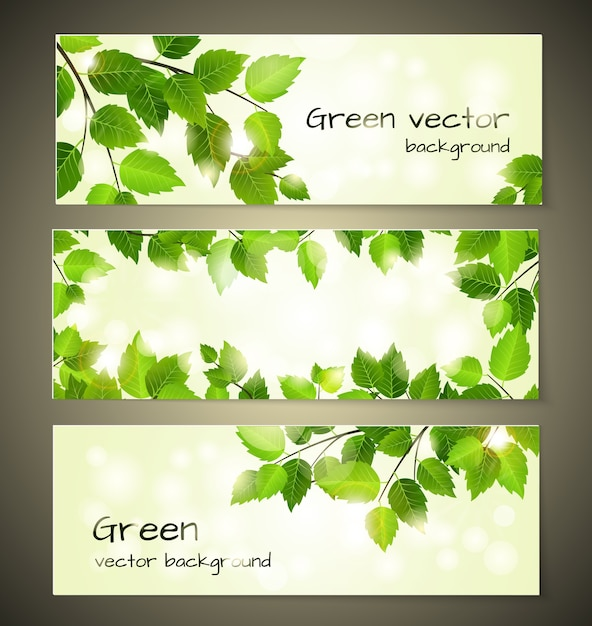 Green leaves banners set design vector templates Free Vector