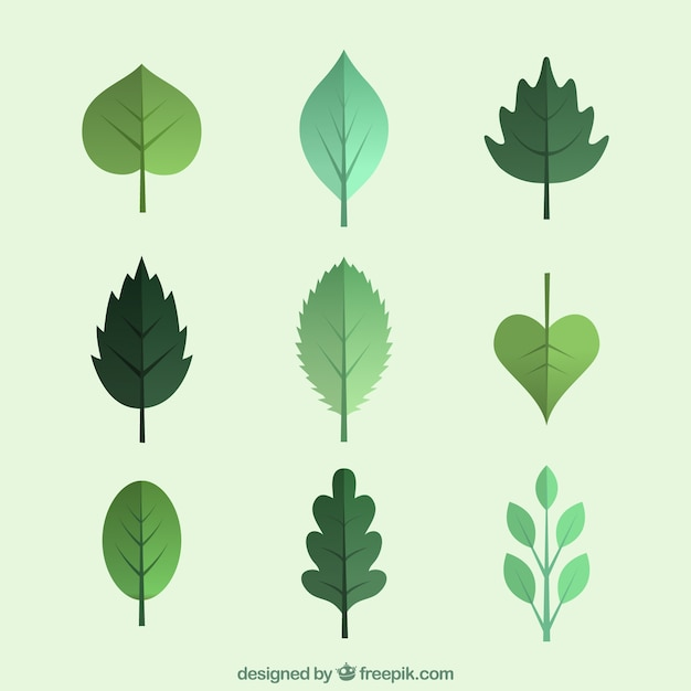 Green leaves collection Free Vector