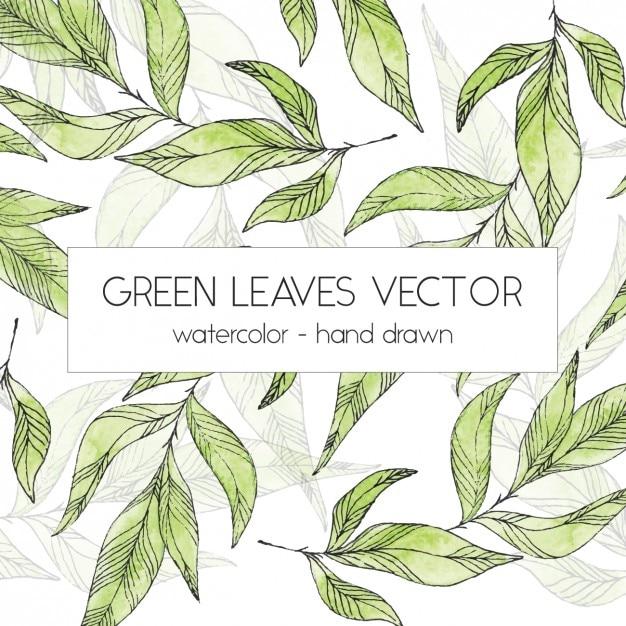 Green leaves design Free Vector