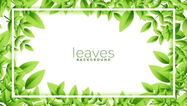 텍스트 공간 디자인 녹색 나뭇잎 프레임 무료 벡터