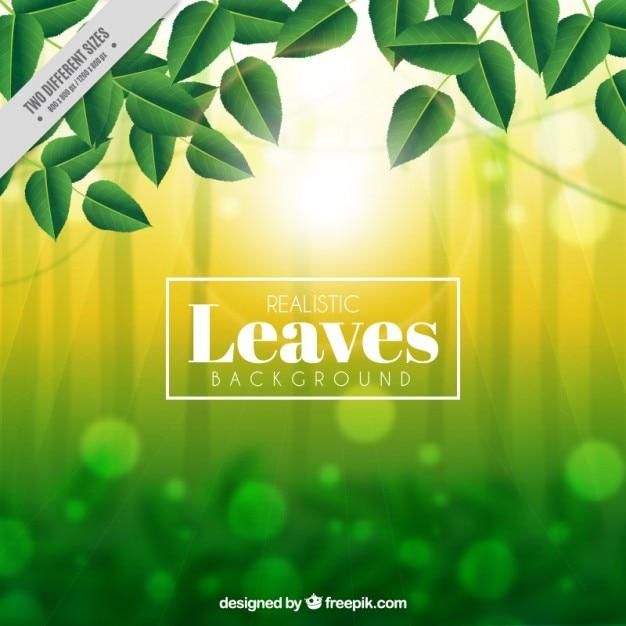 برگ های سبز در یک پس زمینه انتزاعی بوکه