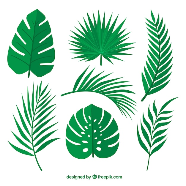 Green leaves set of palm trees Free Vector