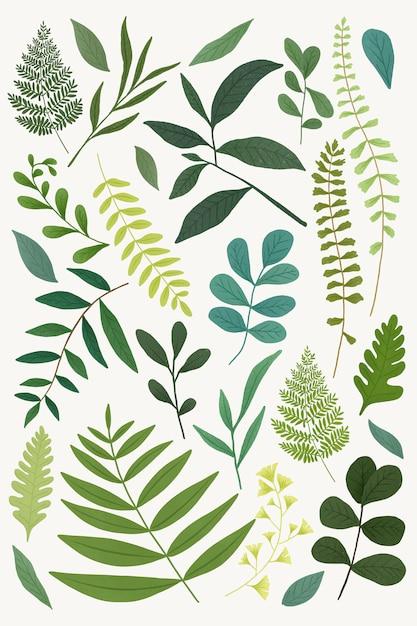 Green leaves set Premium Vector