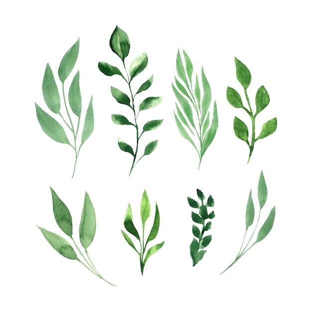 Green leaves vector watercolor set. Free Vector