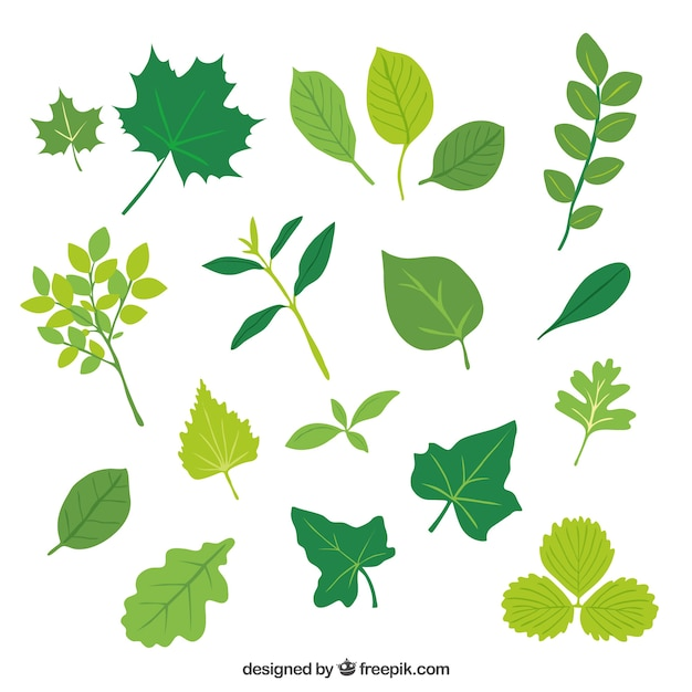 Green leaves Free Vector