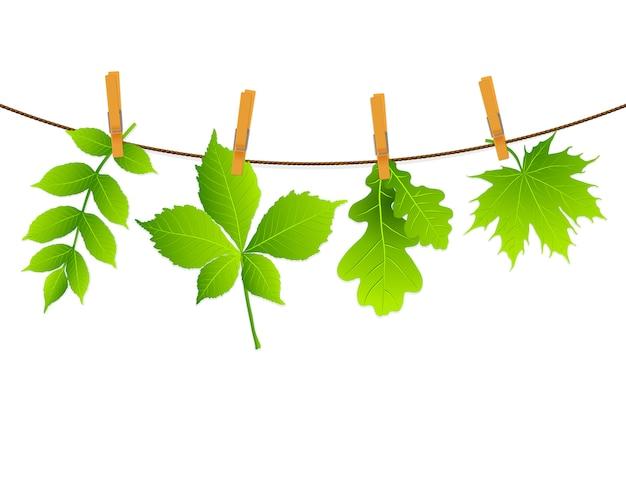 Green leaves Premium Vector