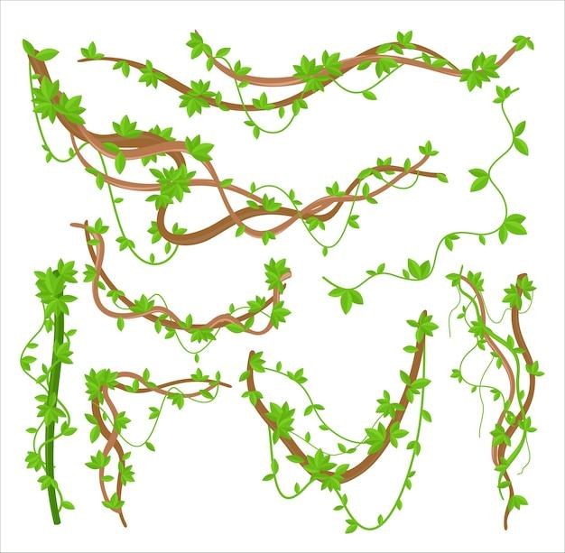 Набор плоских иллюстраций лианы растений лианы. вьющиеся растения тропических лесов Premium векторы