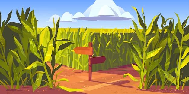 녹색 옥수수 식물과 옥수수 밭 사이의 모래 도로, 화살표와 교통 표지가있는 나무 기둥. 농장 농업 풍경, 자연 현장 만화 일러스트 레이 션. 무료 벡터