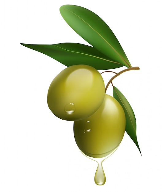 Green olive branch isolated on white background. realistic vector illustration Premium Vector