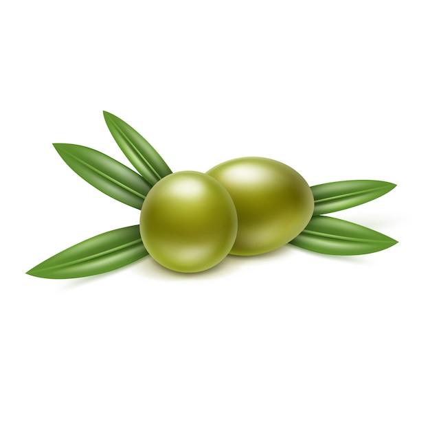 白い背景の上の葉でグリーンオリーブの枝 Premiumベクター