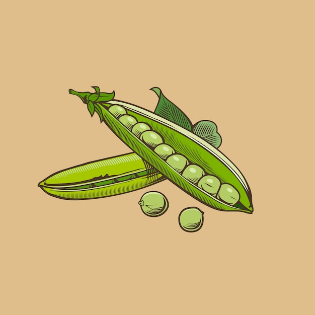 Green pea in vintage style. colored vector illustration Premium Vector