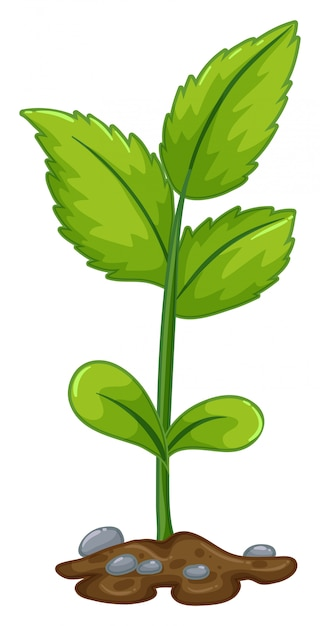 Green plant growing from underground Free Vector