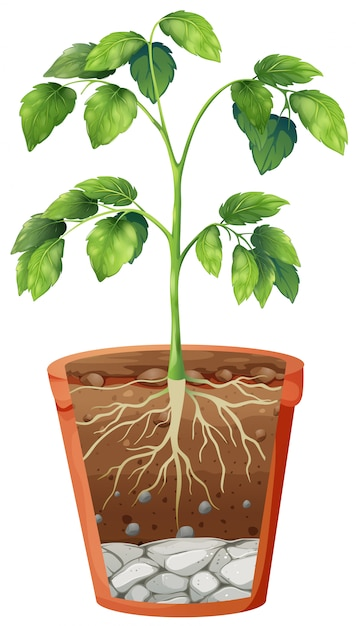 Green plant in the pot on isolated Free Vector