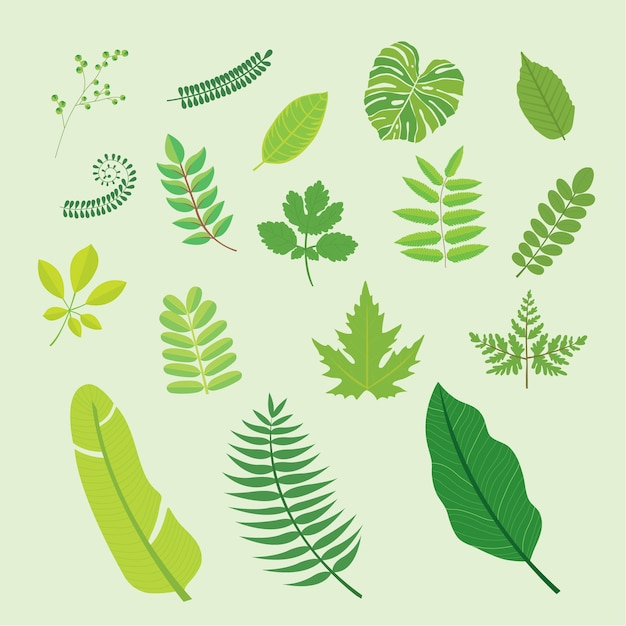 Green plants tropical palm leaves Premium Vector