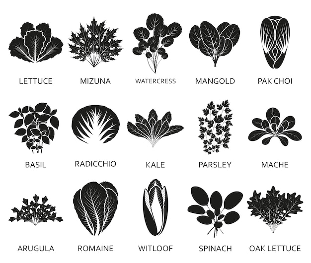 Green salad plants isolated on the white background. Premium Vector