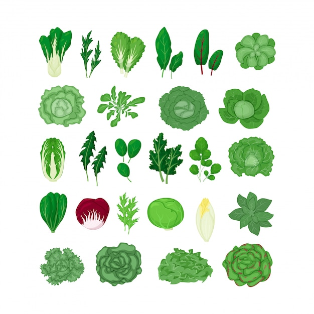 Green salad vegetables leaves set illustration isolated on white in a cartoon flat style. natural lettuce leaf. Premium Vector