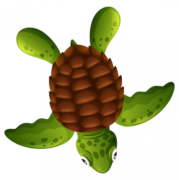 A green sea turtle on white background Free Vector