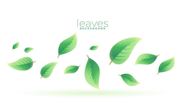 Листья зеленого чая падают фон дизайн Бесплатные векторы