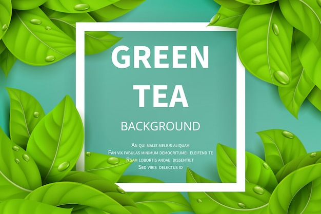 Green tea leaves vector nature background Premium Vector