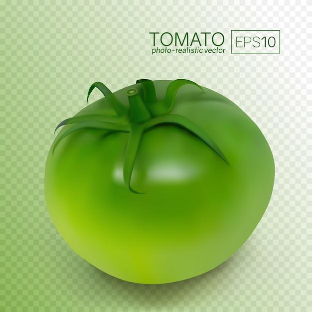 Зеленый незрелый помидор на белом фоне. фотореалистичные векторные иллюстрации. эти помидоры можно разместить на любом фоне. Premium векторы