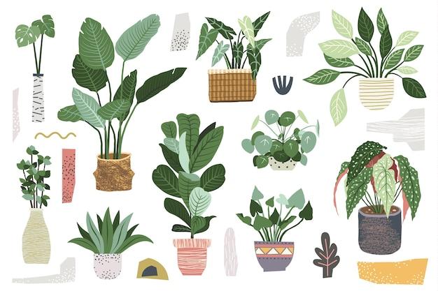 緑の屋内観葉植物コレクション Premiumベクター