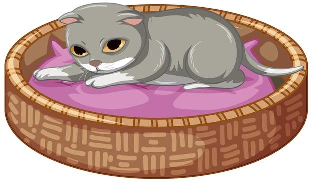 흰색 바탕에 그의 침대에 누워 회색 고양이 무료 벡터
