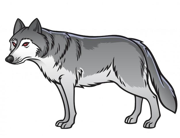 Grey wolf Premium Vector