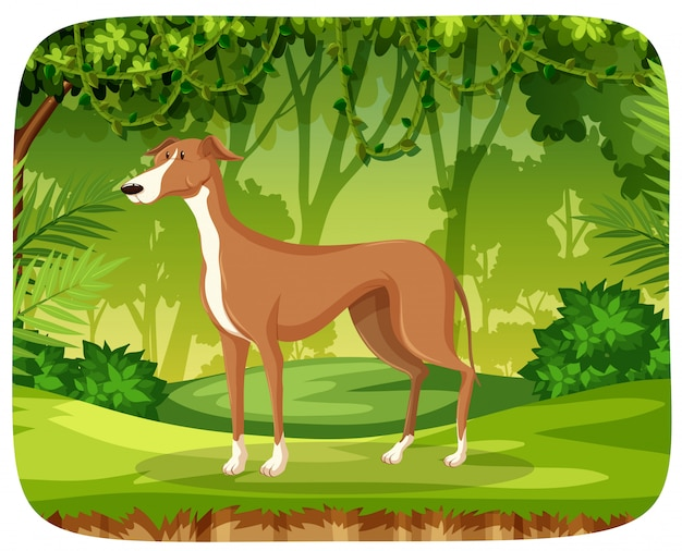 A greyhound in the jungle Free Vector
