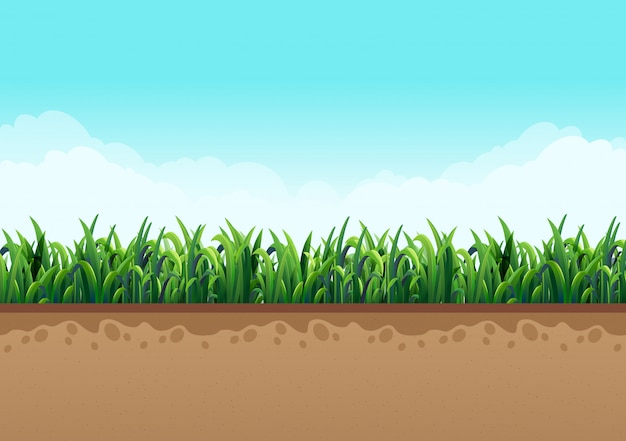 Ground  with green grass along with nature and sky with beautiful clouds. vector illustrations Premium Vector