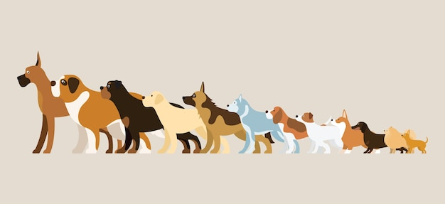 Group of dog breeds illustration side view arranged in height order Premium Vector