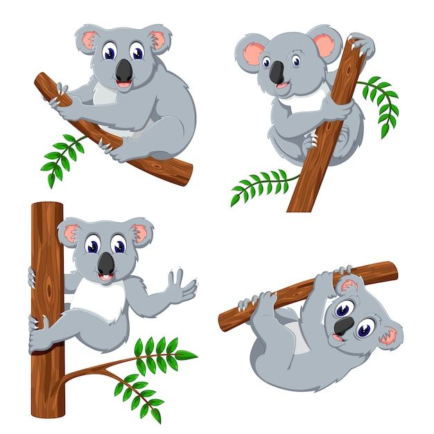 A group of koala cartoon Premium Vector